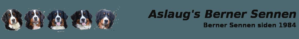 Velkommen til Aslaug's Berner Sennen